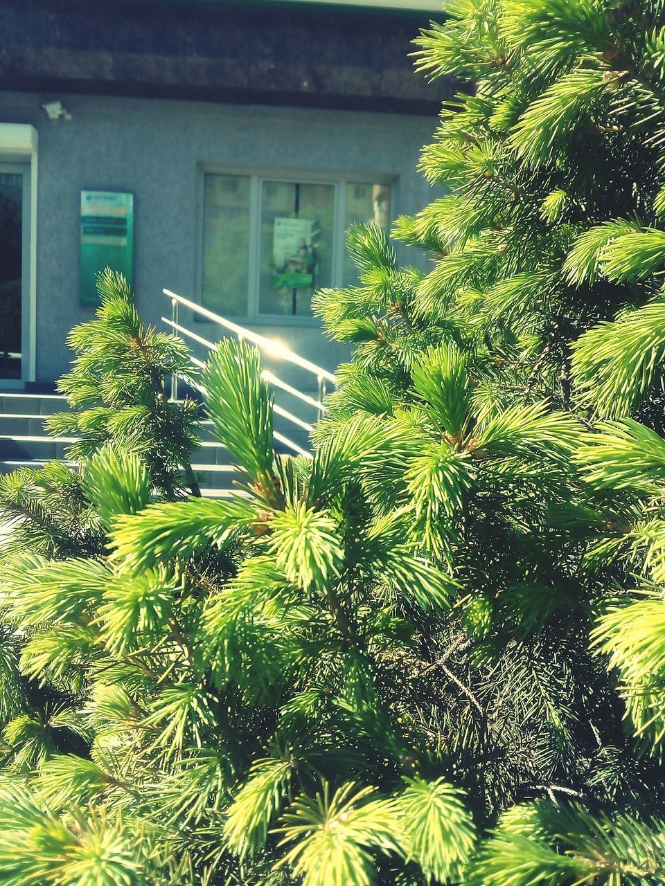 growth, architecture, house, plant, building exterior, built structure, no people, tree, nature, outdoors, green color, day, close-up