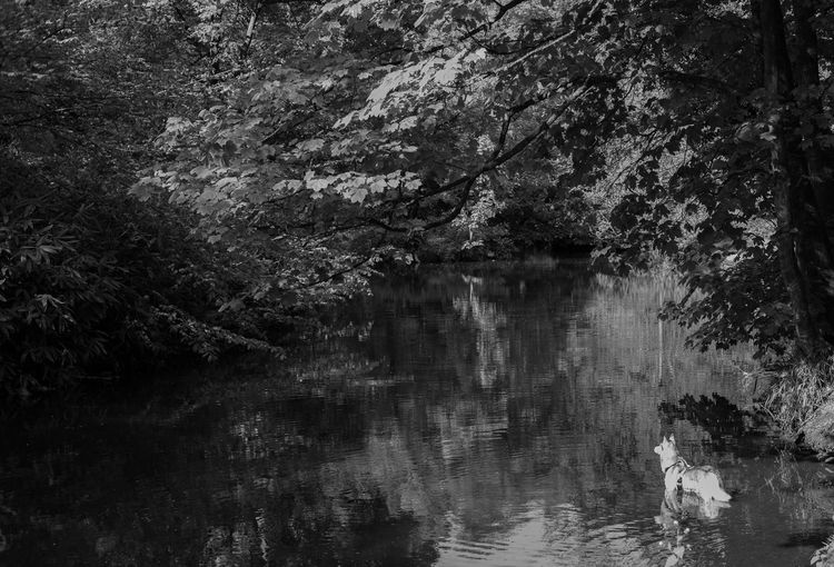 snuff mills, May 2018 Dog Tree Water Full Frame Forest Backgrounds Lake Reflection Sky Tranquility Countryside Calm Greenery Woods Tranquil Scene