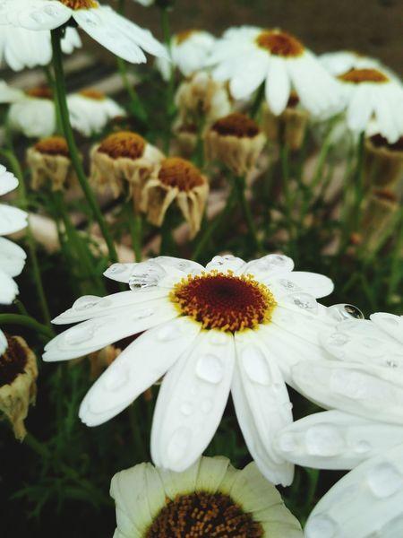 Flower Flower Head Flower Collection Flower Photography FlowerLove 🌸 Outdoors Outdoor Photography