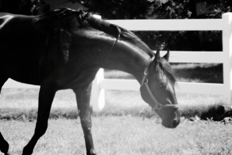 Horses grazing in field