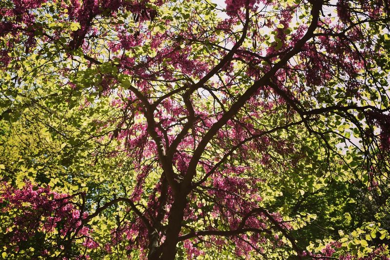 Nature Branch Growth Day Outdoors No People Springtime Tree First Eyeem Photo
