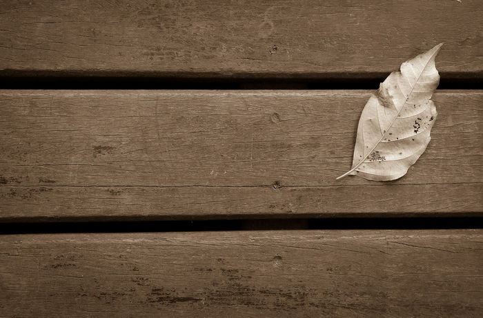 Dry leaves on the wooden floor in sepia color tone. Alone Arid Art Close-up Coffee Time Deck Design Lanscape Leaf Lonely Monochrome No People Purposeful Relaxing Top Perspective Wood - Material