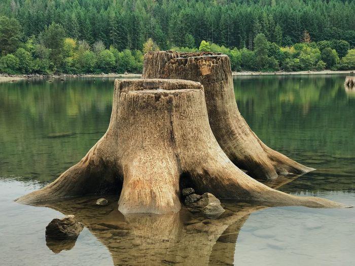 Driftwood in a lake