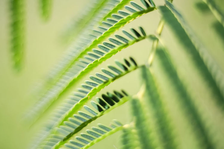 Leaf Green Color Macro Plant Backgrounds Close-up Freshness Growth Nature Seletive Focus Greenery Coloroftheyear Pantone 2017 Springtime The Week On EyeEm EyeEmNewHere Suavidad Suavity Freshness Smoth Smoothie Ethereal Artphotography Abstract Fragility