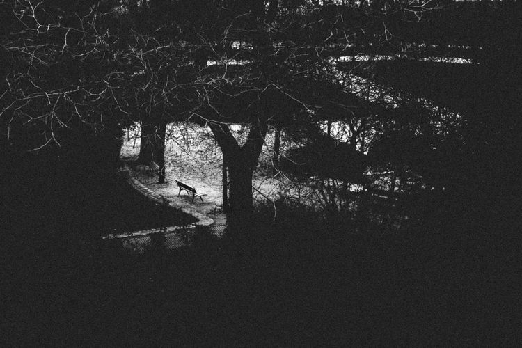 Black And White Friday Day Landscape No People Outdoors Tranquility Tree