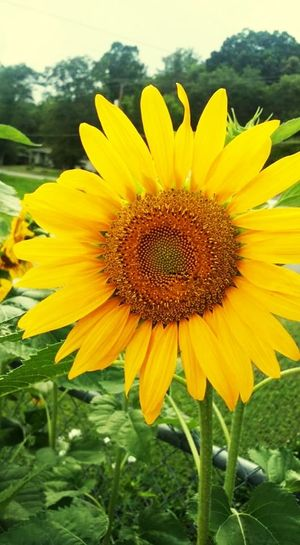 Flower Yellow Plant Nature Petal Freshness Flower Head Growth Beauty In Nature Summer Sunflower Rural Scene Fragility Outdoors Selective Focus Botany Uncultivated Day Field Blossom