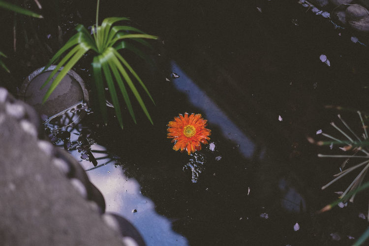 Close-up of flowers in water