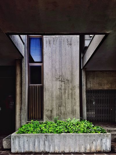 urban garden Contrast Contrasts Reinforced Concrete Urban Exploration Urban Flower Pot Concrete Wall Concrete Wall Green Plant Foliage Foliage, Vegetation, Plants, Green, Leaves, Leafage, Undergrowth, Underbrush, Plant Life, Flora Architecture Built Structure Building Exterior Ivy Entryway Creeper Growing