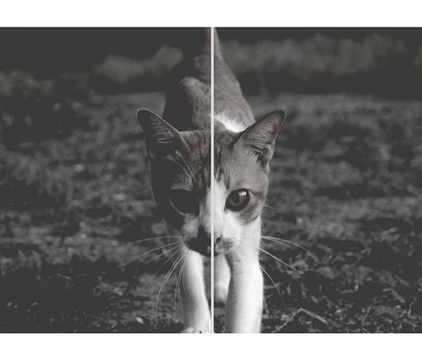 Dark cat. Single eye 18 of P. Meawwwww Canon700D Hipster ArmWatcharapong NCK