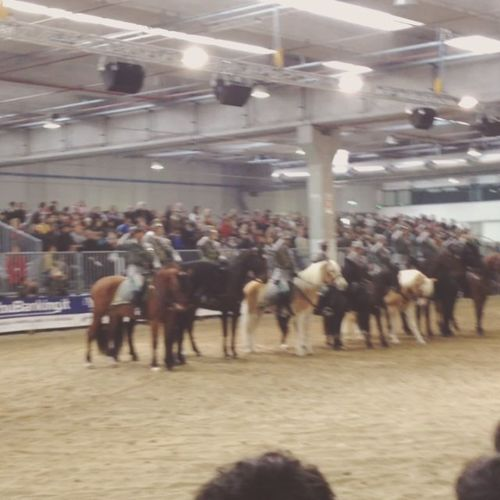 Tutti in piedi #inno #italia #cavalli #mameli #fieracavalli #verona Italia Verona Mameli Cavalli Fieracavalli Inno