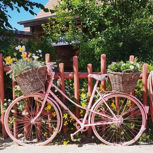 Outdoors Day No People Tree Wood - Material Sunlight Bicycle Nature Flowers Vintage Beauty In Nature Countrylife Grandmother's House Grandmothers Time