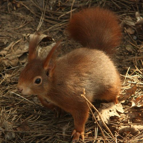 Cuteness overload 😍 Red Squirrel Uk Red Squirrel Cute Squirrel Photo Nature Photographer Wildlife One Animal Animals In The Wild Animal Themes Close-up Animal Wildlife Grass No People Nature Day Outdoors Mammal