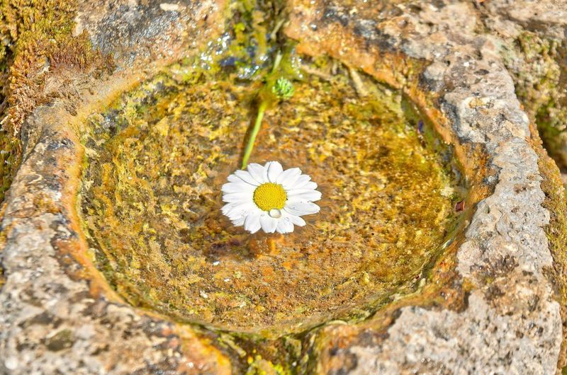 Water source flower Flower Flowering Plant Plant Solid Nature Rock Close-up Freshness No People Water Beauty In Nature Rock - Object Yellow Vulnerability  Fragility Outdoors Day Petal High Angle View Growth Flower Head Springtime Purity Water Source