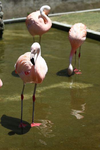 Birds in water