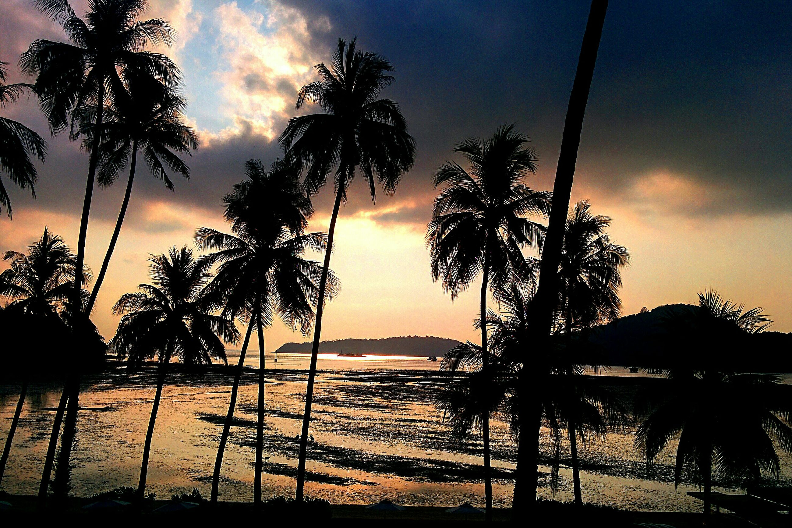 sunset, silhouette, sky, water, tranquility, scenics, beauty in nature, tranquil scene, tree, sea, palm tree, nature, orange color, idyllic, cloud - sky, sun, horizon over water, cloud, tree trunk, growth