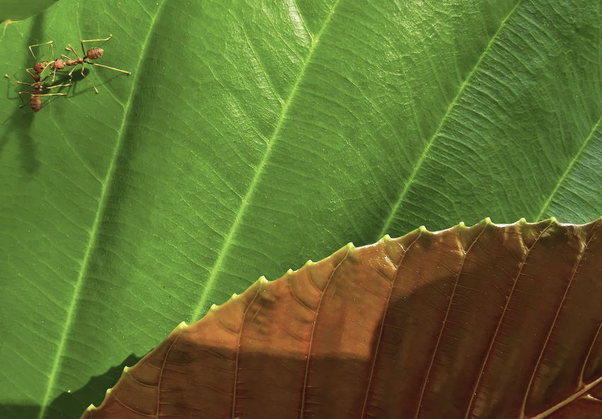 Insects on green leaves with beautiful leaf patterns Leaf Plant Part Green Color Leaf Vein Close-up No People Plant Nature Growth Natural Pattern Day Beauty In Nature Leaves Outdoors Focus On Foreground Insect Pattern Fragility Invertebrate Backgrounds