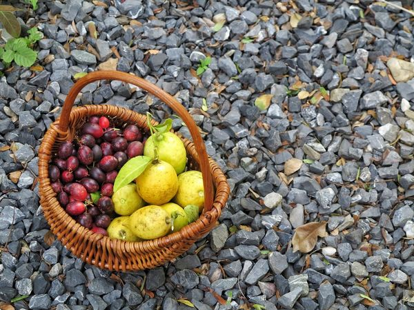 Wild berry Outdoors Basket Fruit High Angle View No People Fruit Freshness Nature Healthy Eating Day Food Lemon Background Beauty In Nature Close-up Stone Background Nature Photography Backgrounds Wild Berries Art Healthy Fruit Organic Food