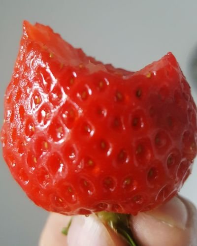 Red Strawberry Fruit Human Body Part Healthy Eating Freshness Human Hand Close-up Juicy Holding Healthy Lifestyle Adults Only One Woman Only One Person People Adult Day Young Adult GERMANY🇩🇪DEUTSCHERLAND@ Germany🇩🇪 Freshness Plant Beauty Erdbeer Erdberen Food Stories