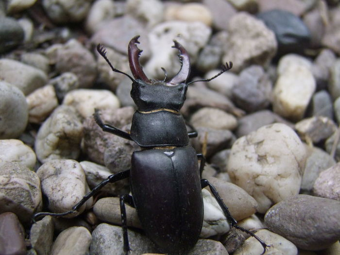 Close-up of insect on pebbles
