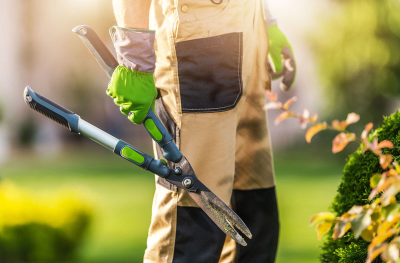 Midsection of man cutting plants in garden
