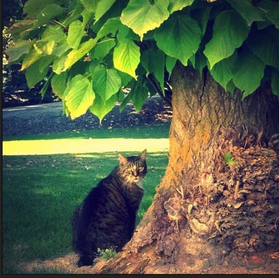 Domestic Cat Keebler Elf Tree Outdoors Domestic Animals EyeEmNewHere Pets Nature Plant Model Model Cat Green Outside