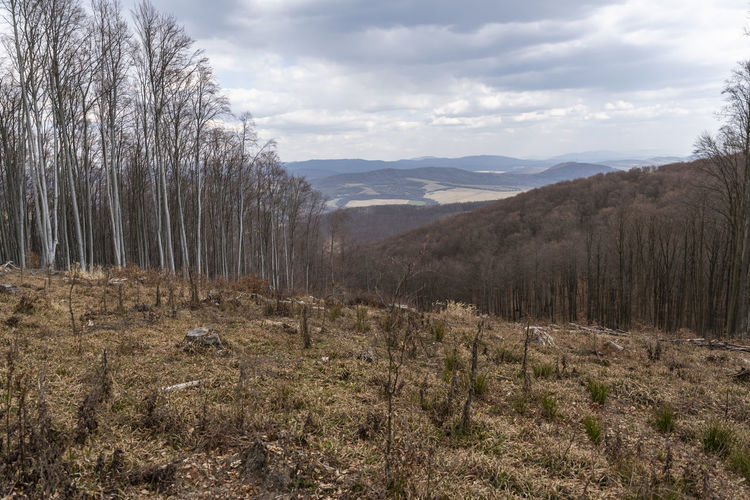 Dramatic view on the forest clear cut from the top into the valley
