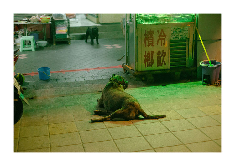 Dog relaxing outdoors