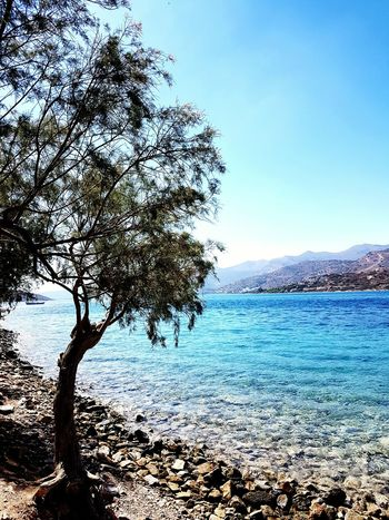 Tree Water Tranquil Scene Beauty In Nature Tree Trunk Blue Nature Sea Calm Idyllic Growth Remote Sunlight No People Spinalonga Island Crete Greece Plant