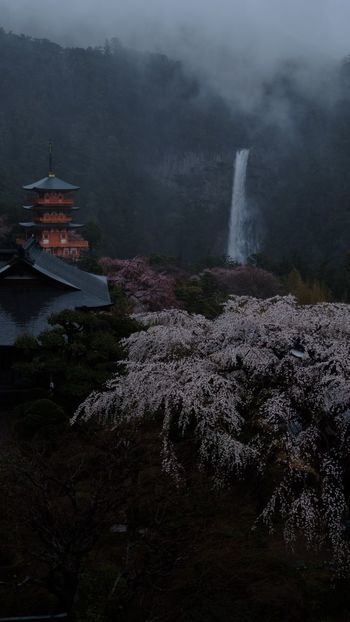 Japan Fall Beauty Nature Outdoors Travel Destinations Fog Scenics No People Mountain Waterfall