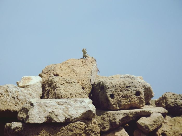 king of the castle King Of The Castle Lizard EyeEm Selects Ancient Civilization Desert Ancient Sculpture Clear Sky History Rock - Object Sky Landscape Old Ruin