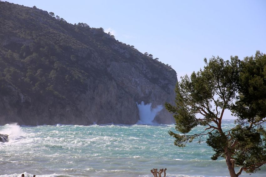 Mediterranean  Andratx Camp Del Mar Mediterranean Nature Mediterranean Sea Mallorca Mallorca (Spain) Wild Sea Waves Crashing Waves Rolling In Waves And Rocks Waves Crashing On Rocks Pine Tree Baleares Balearic Mallorcaisland