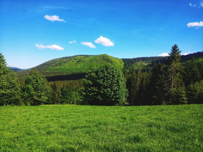 On the way to Wielka Rycerzowa. I'm in love with those green colors of first Photo in here! Mountain View Mountaintrek Megusta Hello World Poland Bestofpoland Green Nature Tree Sky Grass Green Color First Eyeem Photo EyeEmNewHere