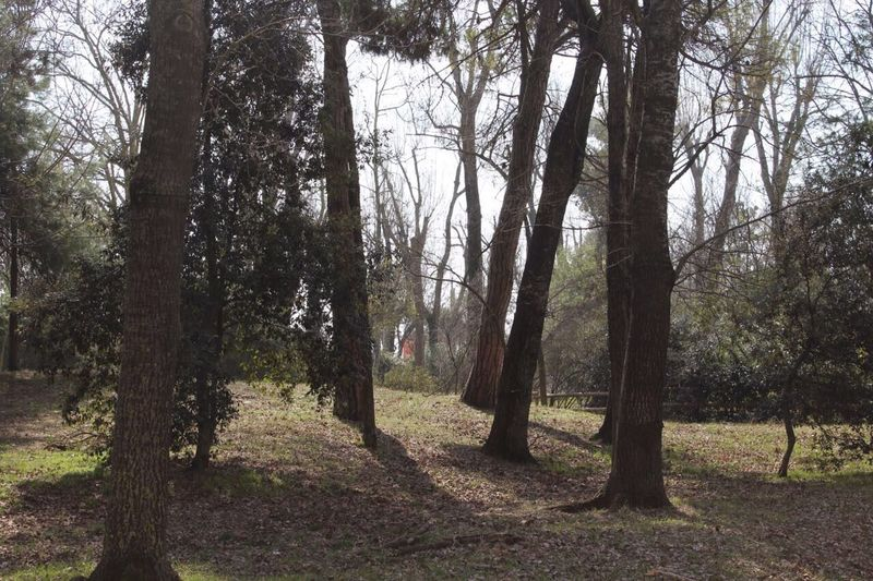Italia Dunaverde Alberi Trees Nature Bosco Wild Giardino Gardin