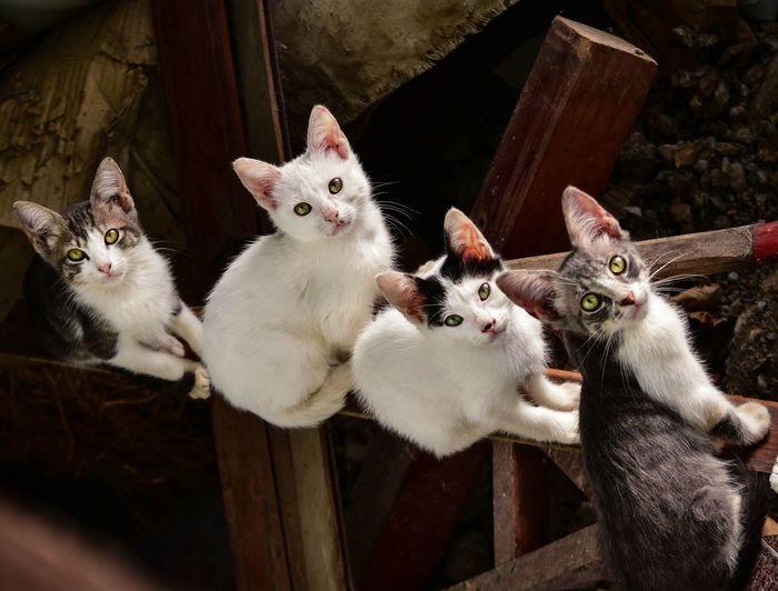 Portrait of cats on railing