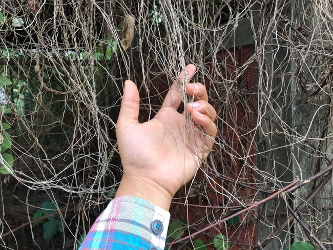 Human Hand Human Body Part One Person Outdoors Lifestyles Real People Leisure Activity