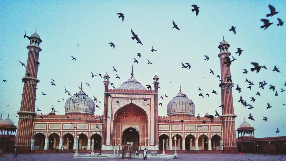 EyeEmNewHere Travel Destinations Building Exterior Architecture Outdoors City Travel Sky No People Day Mobilephotography PhonePhotography EyeEm Best Shots Eye4photography  India Built Structure Historical Building Historical Place Birds In Flight Jama Masjid EyeEmbestshots Eyem Best Shots