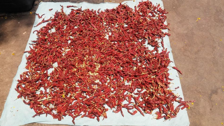 Red Food Freshness No People Close-up Indoors  Day Dry Chilly red chilly Drying Chilly Under Sun