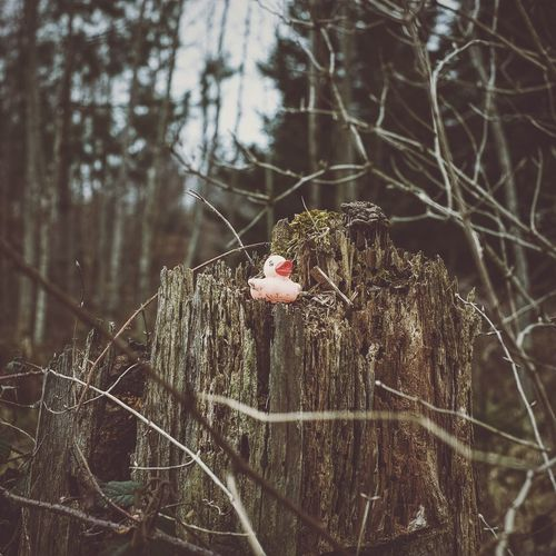 Low angle view of rubber duck on tree stump