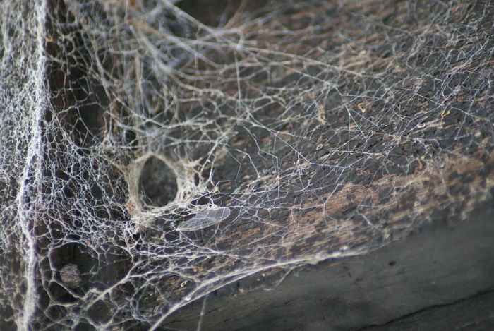 Close-up Nature No People Outdoors Pattern Spider Web Spidersweb Texture Web
