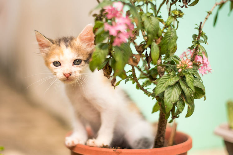Close-up of cat on plant