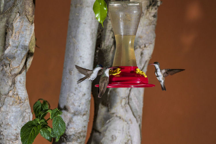 Animal Themes Vertebrate Animal Animals In The Wild Bird Animal Wildlife No People One Animal Focus On Foreground Drink Hummingbird Close-up Nature Bird Feeder Plant Red Food And Drink Glass Day Outdoors