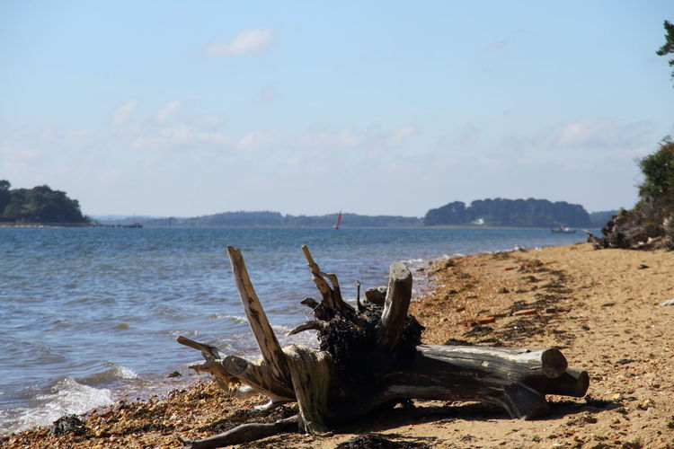 Poole Poole, Dorset Poole Harbour Brownsea Island Brownsea Brownseaisland Tree Trunk Treestump Tree Stump Beach