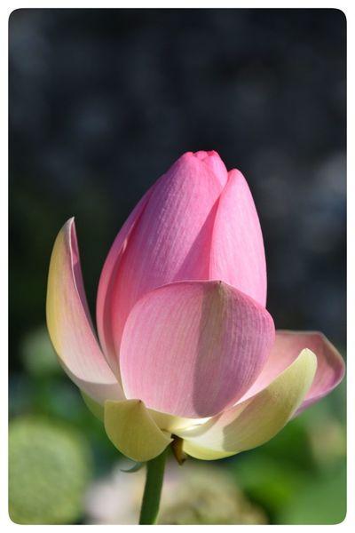 Flower Flowering Plant Petal Vulnerability  Fragility Inflorescence Freshness