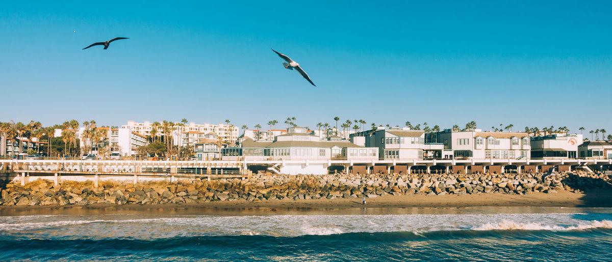 Seagulls Flying Over Beach Against Clear Sky