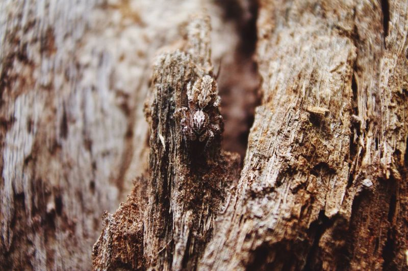 Close-up of tree trunk against rocky surface