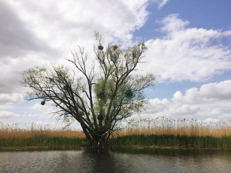 Tree Nature Landscape Water River Oder Sky Bank Waterside Waterfront