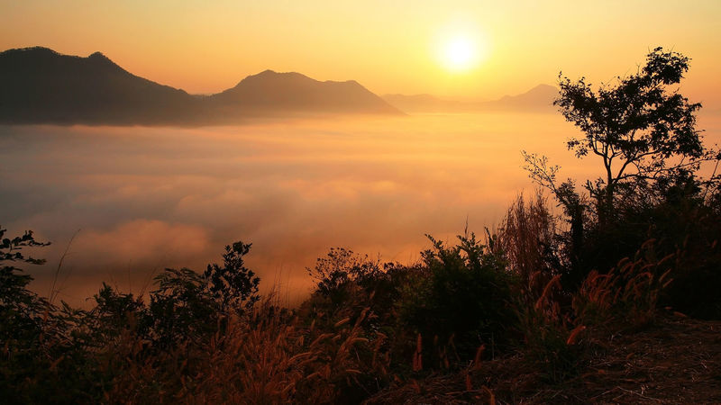 Misty with sunrise at Phu Tok Mountain in Chiang Khan, Loei EyeEmNewHere Loei Beauty In Nature Day Fog Growth Landscape Mist Mountain Nature No People Outdoors Plant Scenics Silhouette Sky Sun Sunlight Sunrise Sunset Tranquil Scene Tranquility Tree