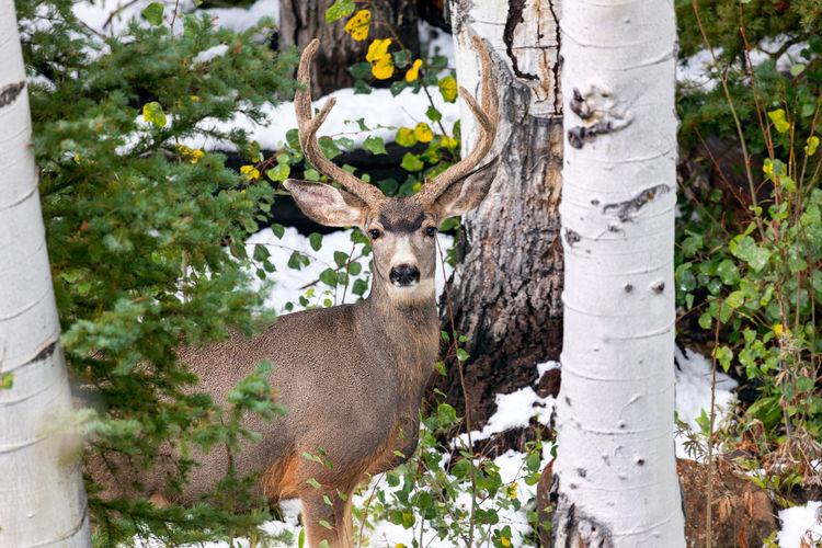 Portrait of deer standing in forest
