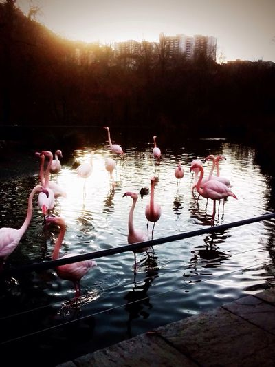 chilling with Flamingos