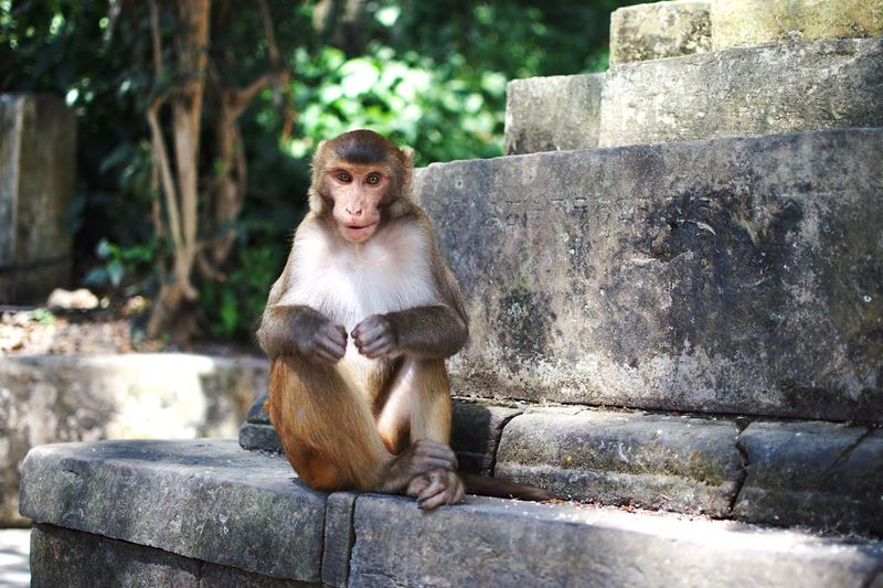 Don't look into the camera. Himalayas Wildlife Nepal Monkey Primate Mammal Animal Day Sitting Representation Animal Themes Focus On Foreground One Animal Retaining Wall Wall Nature Outdoors No People Art And Craft Sunlight